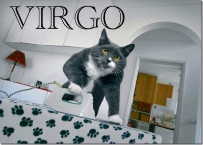 Image result for virgo kitty